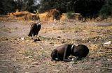 criana-sudanesa-preview